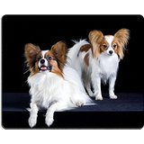 luxlady Gaming Mousepad Zwei Hunde of Breed Papillon auf einem schwarzen Hintergrund Bild-ID 6404963 - 1