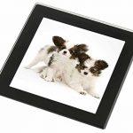 Papillon Hunde Glasuntersetzer mit schwarzem Rand Weihnachtsgeschenk - 1
