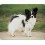 Mauspad Hund Papillon#2 - 1