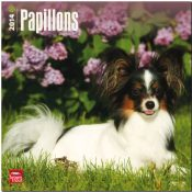 Papillons 2014: Original BrownTrout-Kalender [Mehrsprachig] [Kalender]