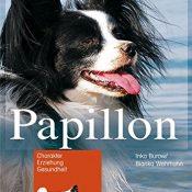 Papillon: Charakter, Erziehung, Gesundheit - 1
