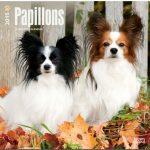 Papillons 2015: Original BrownTrout-Kalender [Mehrsprachig] [Kalender] - 1