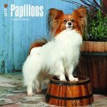 Papillons 2017 - 18-Monatskalender mit freier DogDays-App: Original BrownTrout-Kalender [Mehrsprachig] [Kalender] (Wall-Kalender)