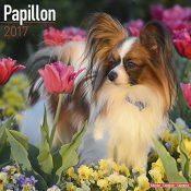 Papillon Calendar 2017 - 1