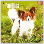 Papillons 2016 - 18-Monatskalender mit freier DogDays-App: Original BrownTrout-Kalender [Mehrsprachig] [Kalender] (Wall-Kalender) - 1