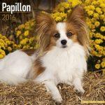 Papillon Calendar 2016 - 1