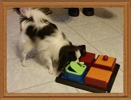 Intelligenzspielzeug-für-Hunde